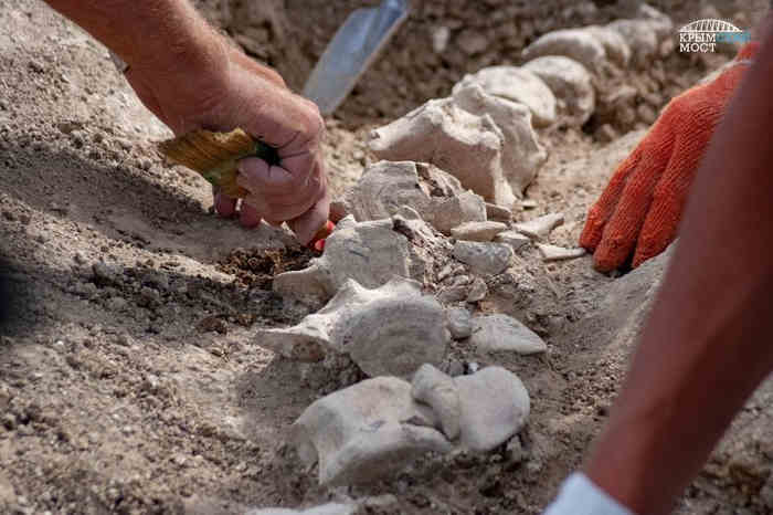Во время раскопок античных захоронений обнаружили окаменевшие останки доисторического животного