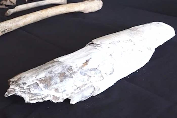 В Уфе во время строительства пешеходного перехода археологи обнаружили останки мамонта. Находку сделали около монумента Дружбы.